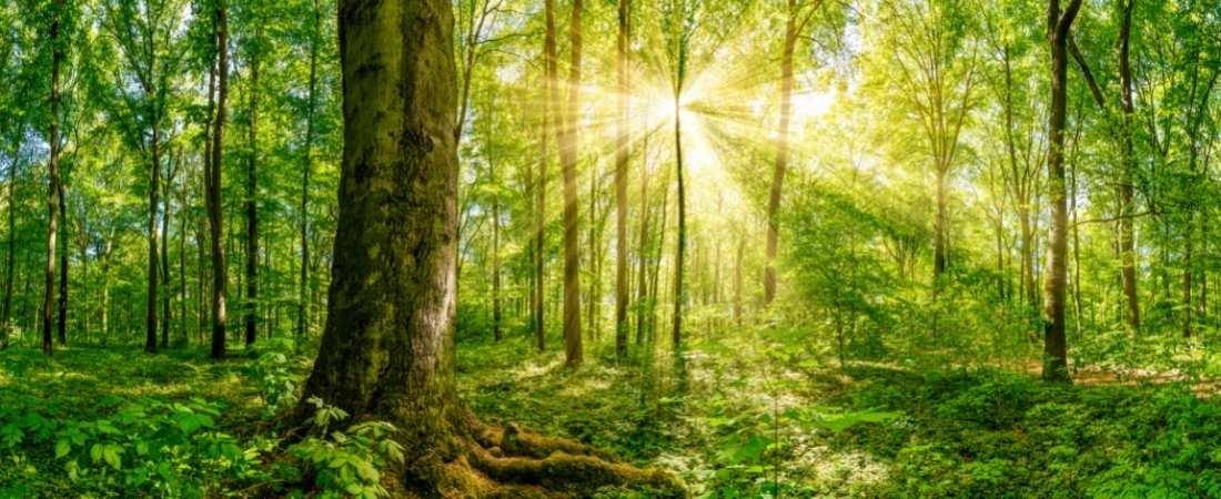 Energías Renovables ECOFOREST