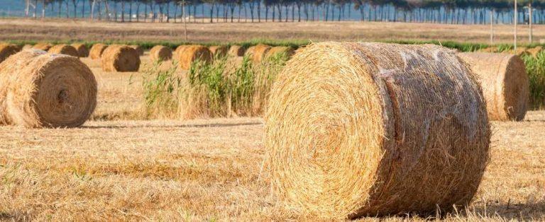 Las ventajas y desventajas de la biomasa